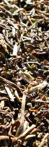 Darjeeling Tee Puttabong Bio